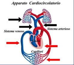 Malattie del sistema circolatorio | Benessere.com