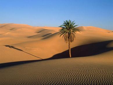 Nella fascia tropicale ci sono tre paesaggi la foresta for Semplici paesaggi