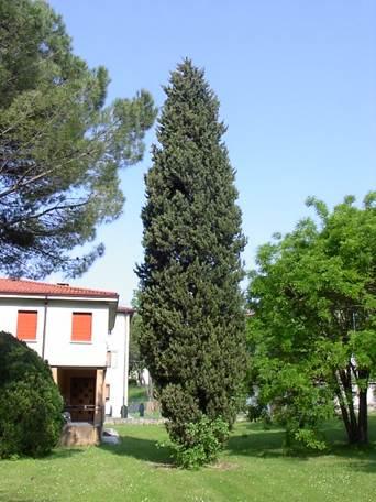 Alberi da giardino e per parchi - Nomi di piante da giardino ...