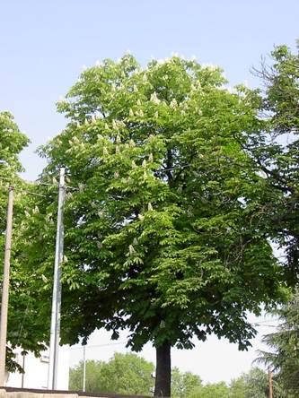 Alberi da giardino e per parchi - Foto di alberi da giardino ...