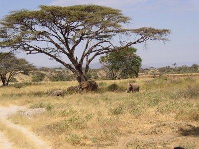Nella fascia tropicale ci sono tre paesaggi la foresta - Gli animali della foresta pluviale di daintree ...